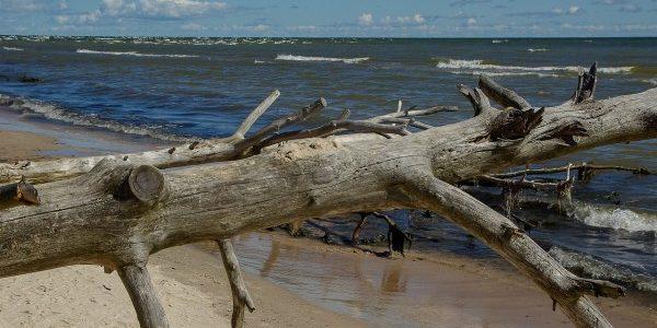 bois flotté sur la plage