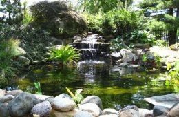 cascade bassin aquatique