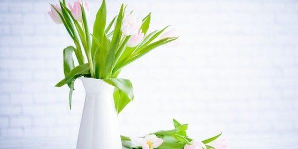 fleur-plante-decoration