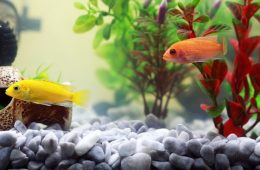 fish-961953_640