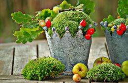 apple-tree-nature-branch-plant-fruit-685555-pxhere.com