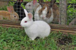 rabbit-3267568_640