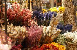 flowers-878822_960_720