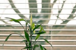 bamboo-blinds-color-decoration-green-growth-1517573-pxhere.com