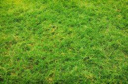 field-1853614_640
