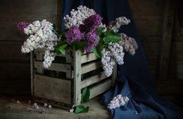 décoration boite bois intérieur vin