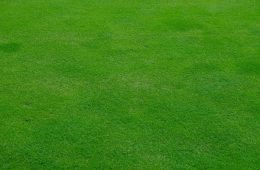 gazon verdure jardin