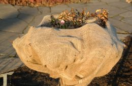 winter-wood-leaf-flower-bag-roses-998044-pxhere.com